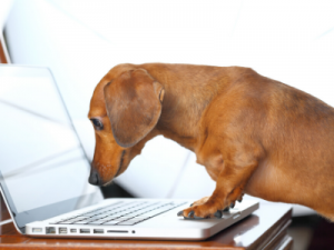 Pet Website Design
